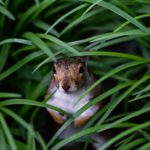 Choices and the Squirrel Cage Dilemma by Bill Atkinson of Elemental Edge Training
